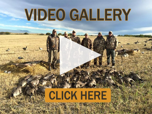 Check out our Alberta Canada Waterfowl Hunting Videos